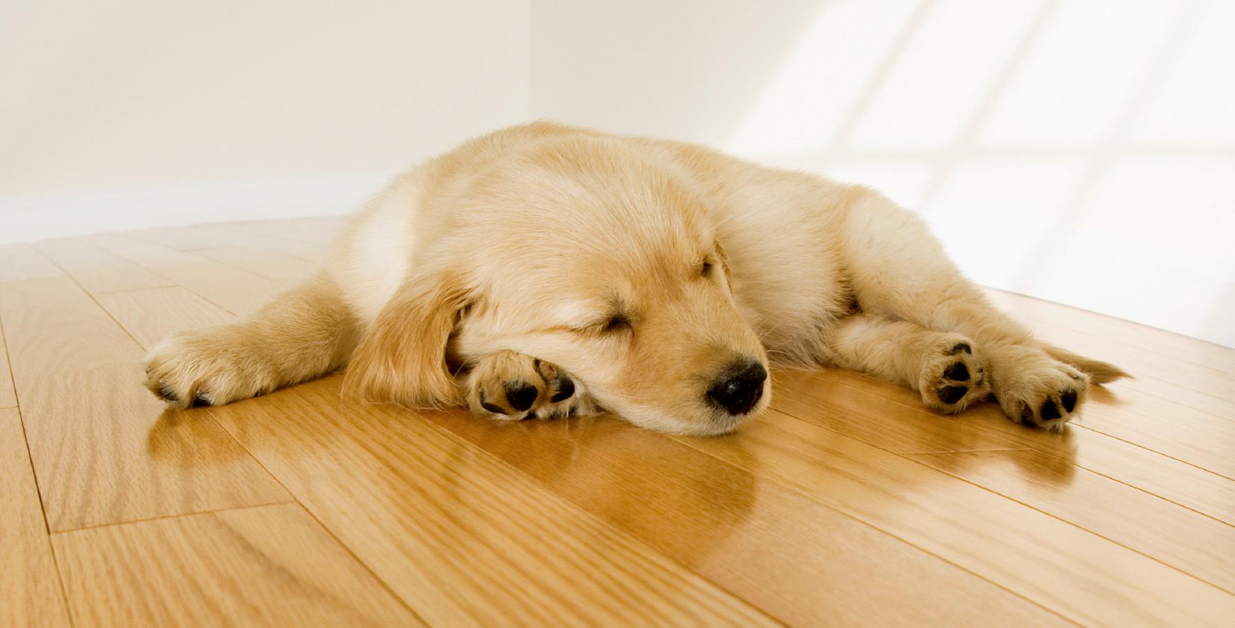 Wohlfühlboden für Hund und Katz'